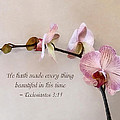 Ecclesiastes 3 11 He Hath Made Everything Beautiful by Susan Savad