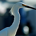 Egret Of Matlacha 2 by David Weeks