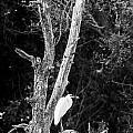 Egret by Steven Ralser