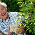 Elderly Lady Gardening by Mauro Fermariello/science Photo Library