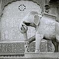 The Beautiful Elephant by Shaun Higson