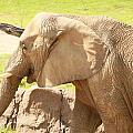 Elephant by Tinjoe Mbugus