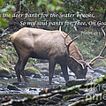 Elk Drinking Water From A Stream by Jill Lang