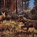 Elk by Genio GgXpress