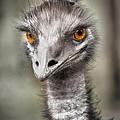 Emu by Kym Clarke