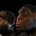 Evolution by Science Picture Co