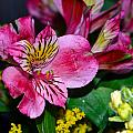 Exotic Flowers by Brent Dolliver