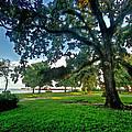 Fairhope Lower Park 4 by Michael Thomas