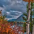 Fall Aspens On Lake Mcdonald by Brenda Jacobs