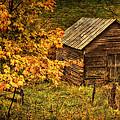 Fall At The Farm by Priscilla Burgers
