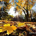 Fall Autumn Park. Falling Leaves by Michal Bednarek