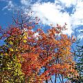 Fall Colors And Blue Sky by Sylvie Bouchard