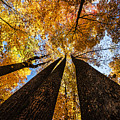 Fall Colors by Tim Palmer