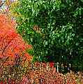 Fall Garden by Ron  Tackett