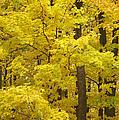 Fall Glory by Elaine Mikkelstrup