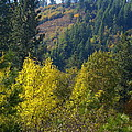 Fall In Spokane by Ben Upham III