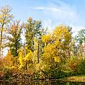 Fall On The Lake by Alain De Maximy