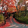 Fall Path by Catie Canetti