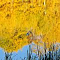 Fall Reflections by Elijah Weber