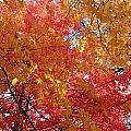 Fall Saint Louis 1 by Monte Landis