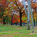 Fall Walk by Jost Houk