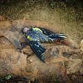 Fallen  by Eagle  Finegan
