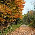 Falling Leaves by Gene Cyr