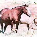 Family Of Horses by Athena Mckinzie