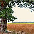 Farmland View by Debbie Portwood