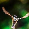 Fast Flight by Brian Stevens
