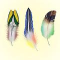 Feathers by Mark Ashkenazi