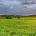 Fields Of Rapeseed In Lower Silesia by Panoramic Images