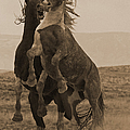 Fighting Wild Stallions by J L Woody Wooden