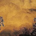 Film Noir Cornell Wilde Storm Fear 1956 Summer Storm Casa Grande Arizona 2004 by David Lee Guss