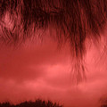 Film Noir Homage Blood Simple 1984 Hanging Tree Branches Casa Grande Arizona 2005 by David Lee Guss