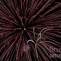 Fireworks by Jason Meyer