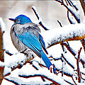 First December Snow by Susanne Still