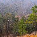 First Snow by Cindy Tiefenbrunn