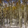 First Snow  by Ellen Heaverlo