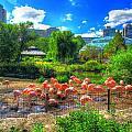 Flamingos by Charlotte Daniels