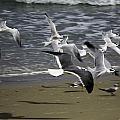 Flight by Fran Gallogly