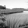 Florida Au Natural Bw by Norman Johnson