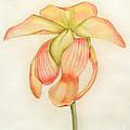 Flower by Divya Kakkar