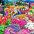 Flower Market In Taksim Square In Istanbul-turkey  by Ruth Hager