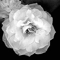 Flower  by Sierra  Mallo