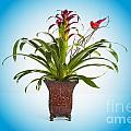 Flowering Plant Bloom 8034.02 by M K Miller