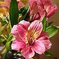 Flowers In Bloom by Christy Gendalia