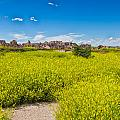 Flowers In The Badlands by John M Bailey
