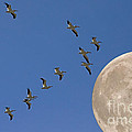 Flying To The Moon by J L Woody Wooden