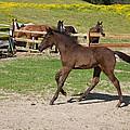 Foal by Scott Sanders